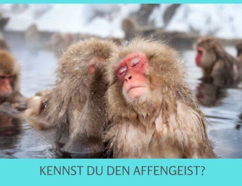 So kannst Du den Affengeist beruhigen